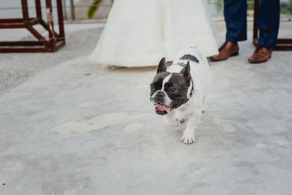 weddingdreams-fotografos_profesionales_de_bodas_1227.jpg